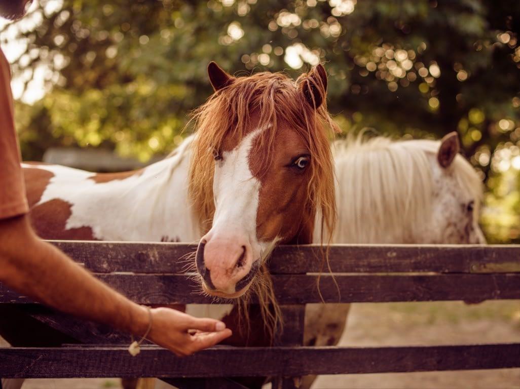 Corsi estivi di equitazione empatica