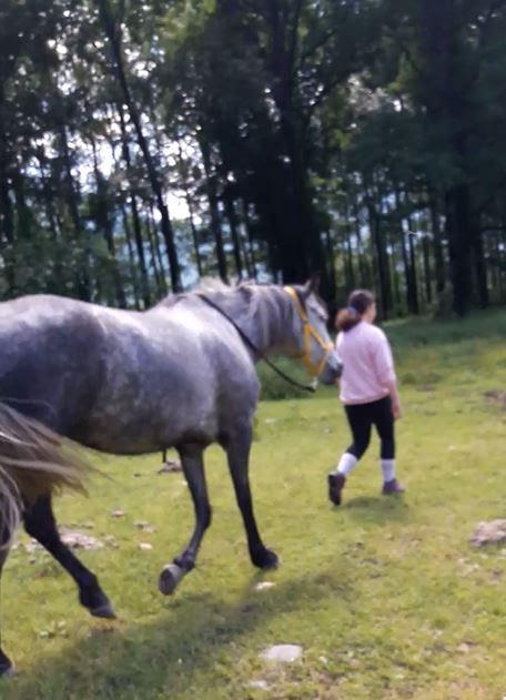 Corsi estivi - Incontrare il cavallo e scoprire sé stesso